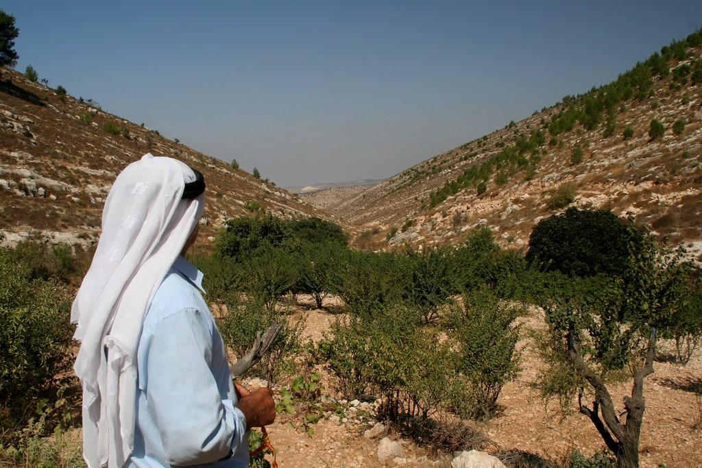Palestine, Land of Olives and Vines